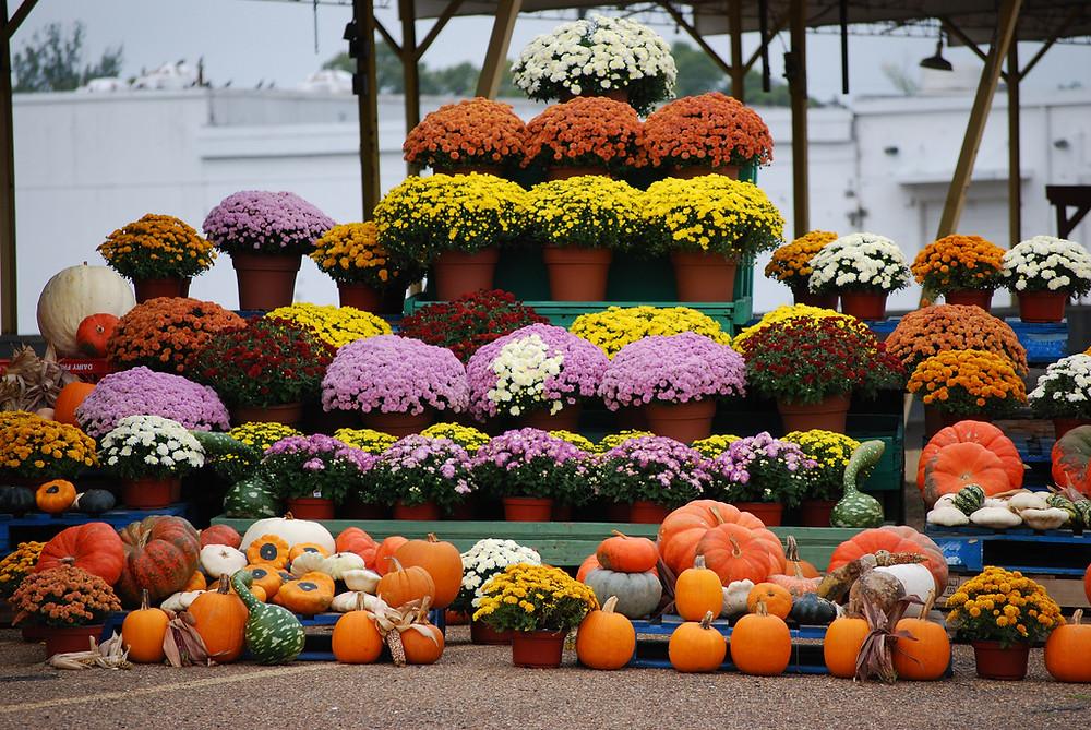 DIY Floral Pumpkin Halloween Decor To Adorn The Abode