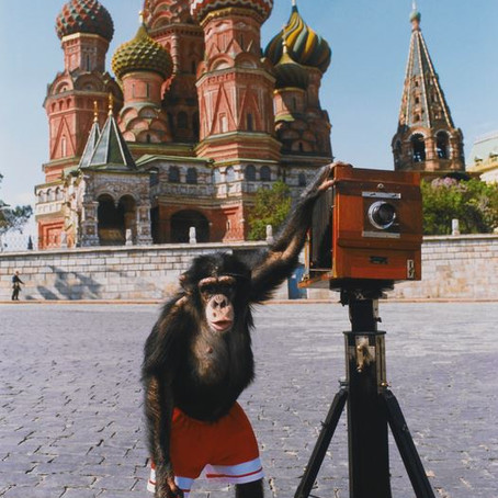 Photos By Chimp sell for over $77,000 Prove Animals are Artists [Video]