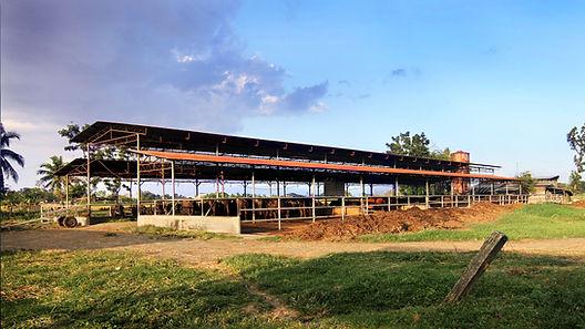 DVF Dairy Farm