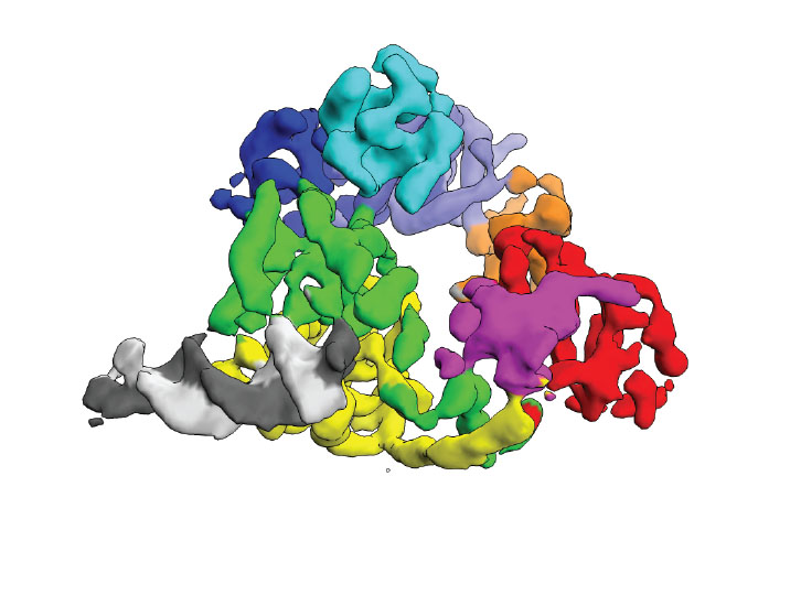 Cryp-EM reconstruction of DNA-bound Mfd