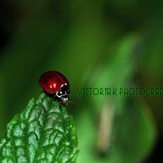 Victoria K Photography
