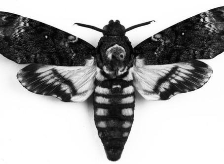 Bugs on Microfilm