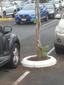 tree surrender carpark rubber kerb.jpg