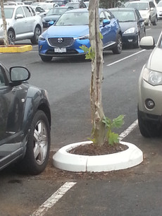 tree surrender carpark rubber kerb.jpg