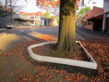 rubber tree surround.JPG