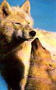 motherwolf_baby.jpg