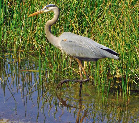birds-of-southwest-florida-bird-identifi