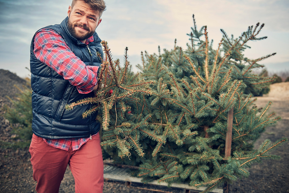 man pulling christmas tree