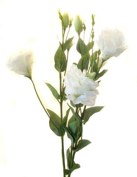 Лизиантус белый, Top Art Studio, HAF0347-TA