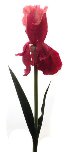 Ирис красный, Top Art Studio, HSD0946-TA