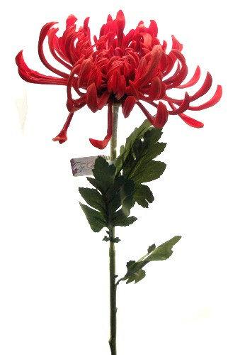 Хризантема Фуджи красная  Top Art Studio