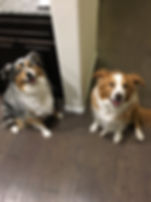 Pups Dogs Huney Blue Messaging Pic.jpg