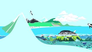 ffflourish homepage illustration