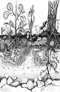 Building Living Soil Booklet