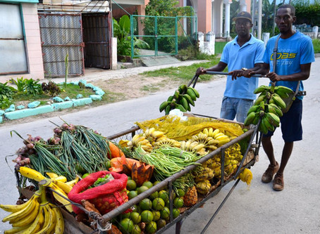 Cuba's Agro-Ecology Movement and What We Can Learn From It
