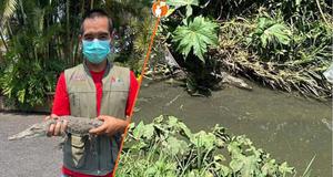 Capturan esta tarde al cocodrilo que llevaba un mes en río de #Morelia
