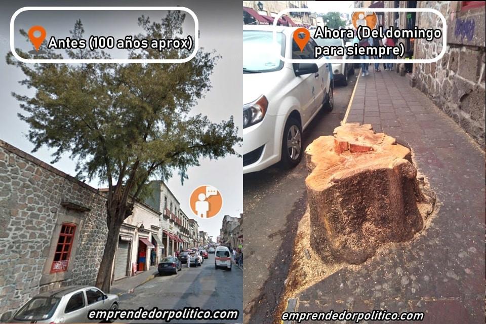 Un pulmón menos para Morelia; Don V$%gas corta árbol del chicle en pleno Centro Histórico