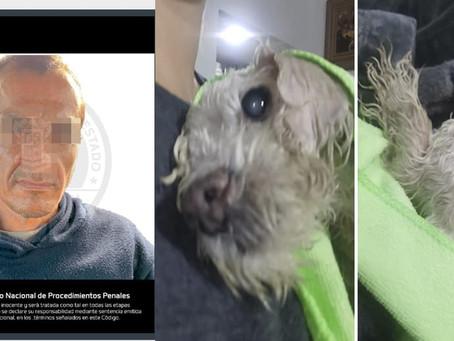 Michoacán: Lo detienen por violar a una perrita ciega; derivado de las lesionas la mascota murió