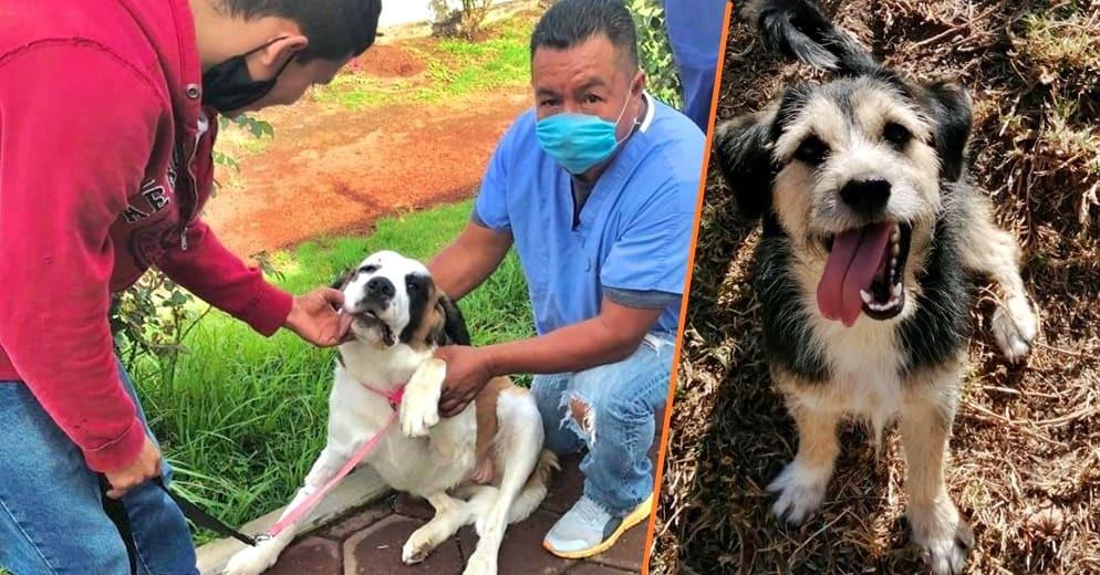 Checa los precios y servicios que ofrece el Centro de Atención Animal de Morelia para tus mascotas
