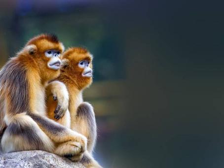 China reporta muerte humana por 'virus del Mono B'