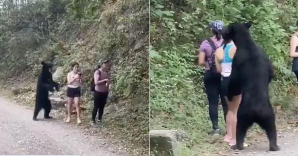 Mexicanas se topan con un OSO y pese al RIESGO se toman SELFIE (+Videos)