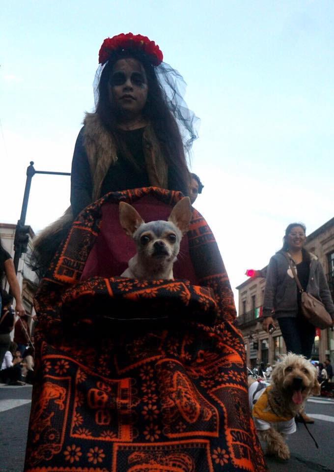 """Por 5to año consecutivo se llevará a cabo la caminata de mascotas """"Contigo hasta los huesos"""""""