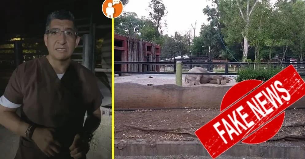 Zoológico de Morelia desmiente muerte de elefante asiático