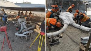 Encuentran restos de 60 mamuts en nuevo Aeropuerto de Santa Lucía (+Fotos)