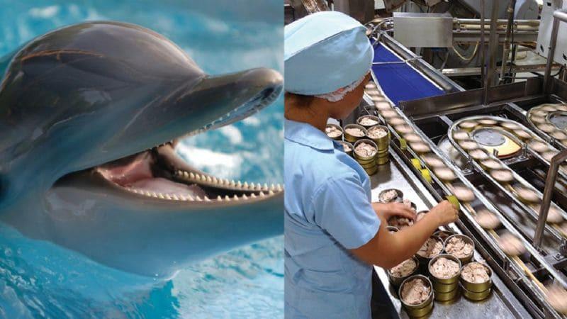 De acuerdo a la UNAM, mexicanos comen delfín pensando que es atún, ¿Implicaciones a la salud?
