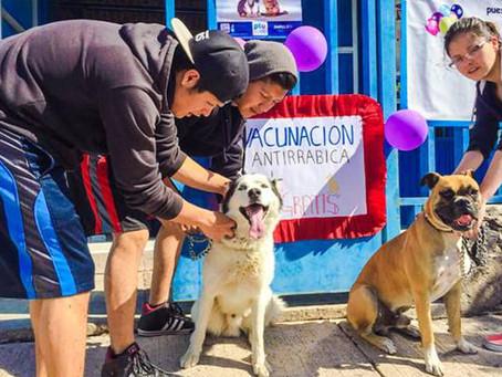 ¿Tienes mascota? Aprovecha la campaña de vacunación antirrábica en Acámbaro