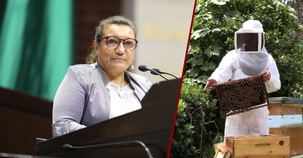 Diputada María Chávez reitera apoyo al sector apícola mexicano con iniciativa de Ley