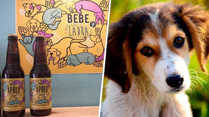 """""""Apolo"""" la cerveza mexicana que ayuda a rescatar perros de la calle"""
