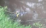 #Policíaca: Encuentran cadáver flotando en Río de Morelia