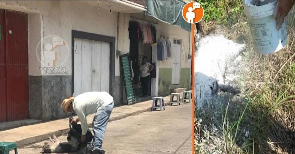 Detectan nuevo brote de envenenamiento de perros en la Tenencia de Puruaran, Turicato