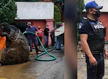 Hallan 'RATA GIGANTE' en drenaje de CDMX que causó inundaciones en los últimos días