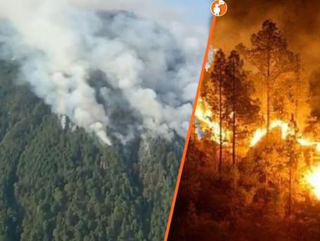 Desconocidos incendian bosque de mariposa monarca; hay daños irreversibles