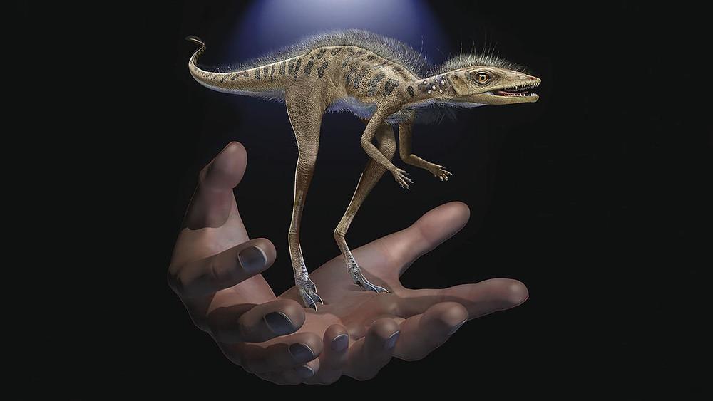 Conoce el ancestro de los dinosuarios del tamaño de una palma de la mano