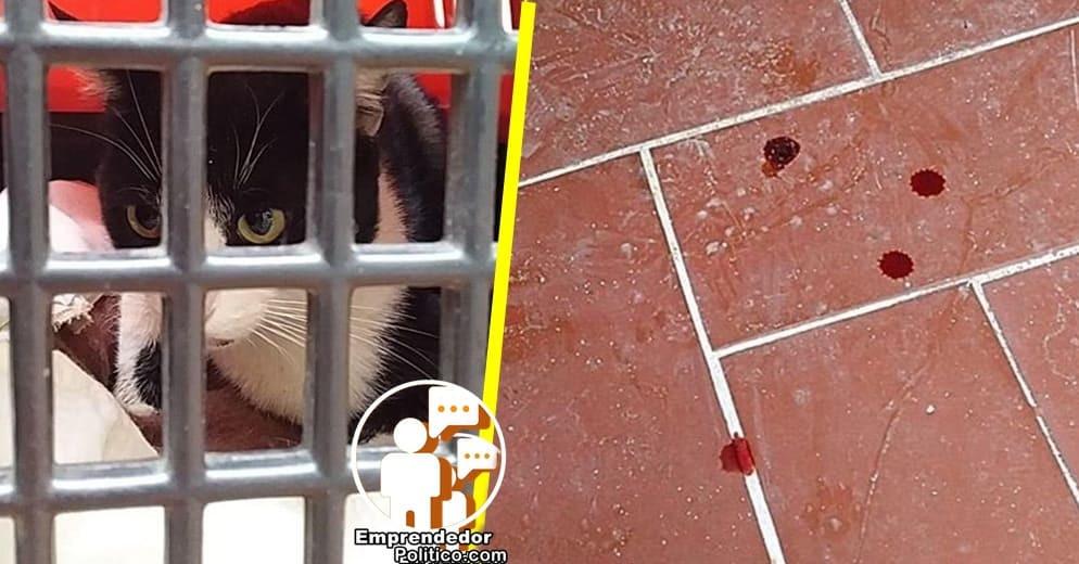 #Morelia: Denuncian violación a gatita en el centro y piden ayuda para su recuperación