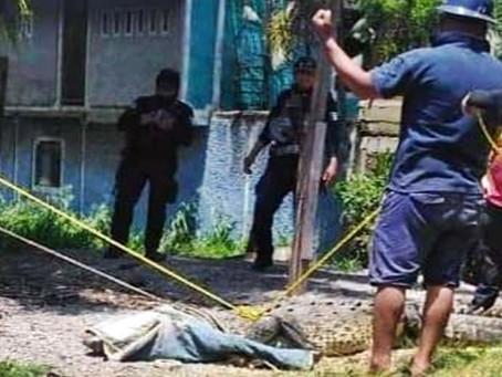 #Michoacán: Capturan ejemplar de cocodrilo de 4 metros en canal de aguas negras de Lázaro Cárdenas