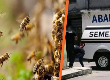 Muere mujer de Tarímbaro tras ataque de abejas