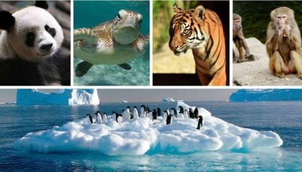 Amenaza la sexta extinción masiva a más de 500 especies de vertebrados