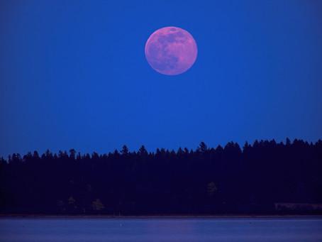 No te pierdas la Superluna rosa; será visible el 26 de abril