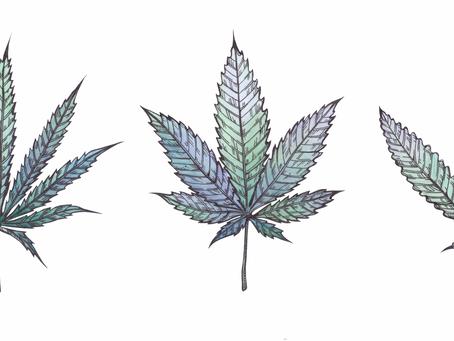 Diferenças entre Cannabis Sativa e Cannabis Indica