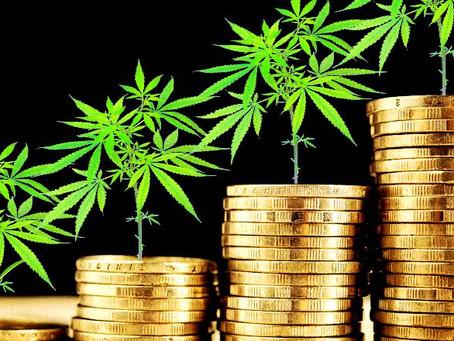O Brasil pode ser líder global de Cannabis medicinal, diz empresário
