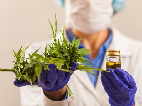 Cannabis medicinal – Liberada para o câncer?