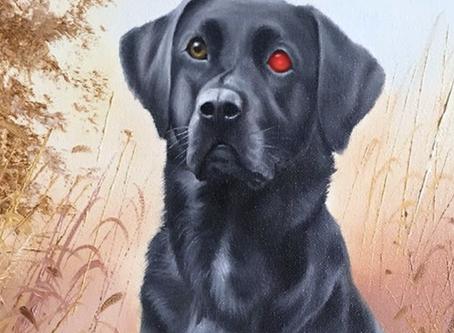 Dog Bots