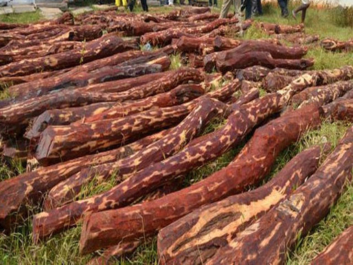 Why you shouldn't use Red Sandalwood