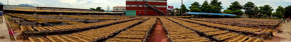 Rows of Sandalwood insence in factory in China