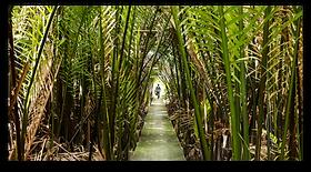 ClermontFU-BangkokSampleCapture d'écran