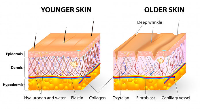Collagen.jpeg